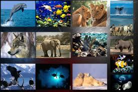 animauxendanger.jpg